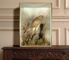 douxquelamort:  Female Hen Harrier by Peter Spicer, owned by Dr R Church.