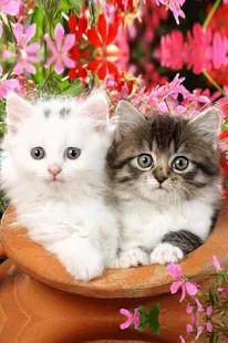 Cute Baby Animals Pictures – miniaturescreenshot