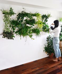 "35 Beautiful Living Wall Indoor Decoration Ideas To Be A Fresh Home - What were the hanging gardens of Babylon really like? As one of the ""Seven Great Wonders of the Ancient World,"" they must have been pretty spectacular. Indoor Plant Wall, Indoor Plants, Plant Wall Diy, Diy Wall Planter, Wall Mounted Planters Indoor, Wall Garden Indoor, Living Wall Planter, Hanging Plant Wall, Planter Boxes"