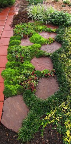 Sedums are decorative between paving stones, great fillers in containers and create colorful groundcovers in landscaping. Landscaping and Garden Project Idea Project Difficulty: Simple MaritimeVintage.com #Landscape #Garden #Gardening #Landscaping