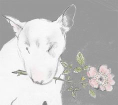 Bull Terrier with Dog Rose Cards Pack of 4