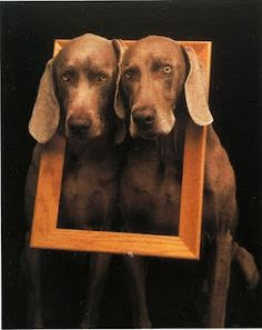 Photograph by William Wegman  I like these dogs, but they also creep me out a little lol!