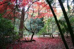 Beautiful colors! -Wandelbos