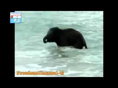 Il primo bagno al mare per il piccolo elefante
