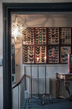 Step inside the eclectic home cum showroom of antiques dealer Alex MacArthur… Butterfly Wall Decor, Butterfly Frame, Butterfly Wallpaper, Butterfly Taxidermy, Elements Of Style, World Of Interiors, Decoration Design, Elle Decor, Interior And Exterior