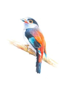 Bird, art, bird print, Watercolor, original watercolor painting, Wall art print, Silver-breasted broadbill----watercolor giclee print by ChiFungW on Etsy https://www.etsy.com/uk/listing/478705567/bird-art-bird-print-watercolor-original