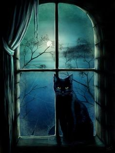 "lucinda-et-lestat-vampir's articles tagged ""image chat noir"" - bienvenue dans… Chat Halloween, Halloween Pictures, Halloween Night, Halloween 2015, I Love Cats, Crazy Cats, Wallpaper Photo Gallery, Full Moon Night, Image Chat"