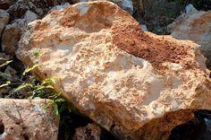 Dipartimento di Scienze della Terra e Geoambientali - Università di Bari - XIV Giornate di Paleontologia - Atti Convegno e Galleria Fotografica - calcare a rudiste (Cava Colonnella)