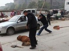 Animal cruelty in China exposed as dogs killed in street by laughing mob including police | World | News | Daily Express