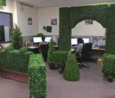 Take an insiders look at the Artificial Plants Unlimited office! We've decorated with artificial boxwood hedges. You can do they same! Give us a call and we will hook you up with all your artificial indoor AND outdoor plant needs!