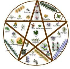 growing a witches garden - Google Search