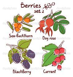 ягоды набор 2 — Стоковая иллюстрация #44087923