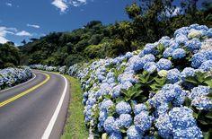 Até a estrada é linda na chegada de Gramado.