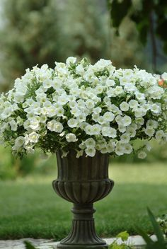 We can't resist this Shock Wave Ivory Petunia in our garden this season. With simple elegance, we can already see this flower blooming at weddings around the country.