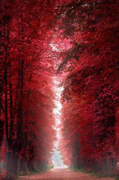 Burning Red Forest - Roskilde, Denmark would be a perfect hallway full length picture/painting with black doors.
