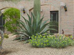 Drought Tolerant Garden Home Design Ideas Pictures Remodel and Decor - Modern Dry Garden, Autumn Garden, Lawn And Garden, Home Design, Design Ideas, Drought Tolerant Shrubs, Desert Plants, Landscaping Plants, Landscaping Ideas