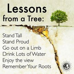 Lesson from a Tree: Stand Tall Go out on a Limb Drink Lots of Water Enjoy the view Remember Your Roots.   #powerofpositivity #positivewords #positivethinking #inspiration #quotes