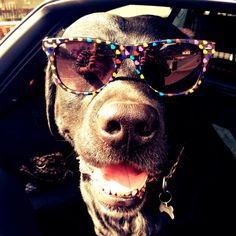 dog's glasses