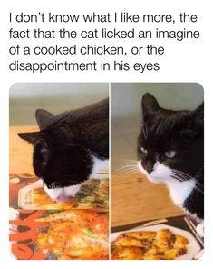 Crazy Funny Memes, Really Funny Memes, Stupid Funny Memes, Funny Relatable Memes, Haha Funny, Funny Cute, Hilarious, Funny Animal Jokes, Cute Funny Animals