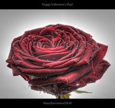 Happy Valentine's Day! (HDR)