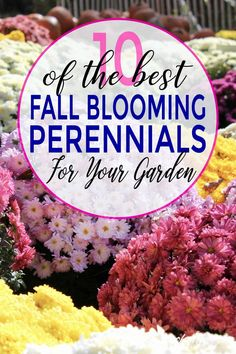Gardening Flowers These shrubs and perennials that bloom in fall are perfect for landscaping backyards in autumn. Whether you need plants for full sun or shade, there are some fall flowers that will suit your yard. Fall Perennials, Full Sun Perennials, Full Sun Plants, Blooming Plants, Flowering Plants, Potted Plants, Summer Plants, Fall Plants, Best Plants For Shade