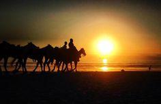 No hay mejor manera de terminar el día que con un paseo a caballo por la playa #RosaritoMeRelaja Foto-aventura por lauriiiiiii7 #Rosarito #sunset #sea #beach #seaside #saltybreeze #horse #vacation #visit #trip