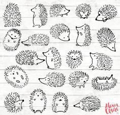 H risson Clipart 22 h risson Doodle Clip art carte de Etsy Hedgehog Art, Hedgehog Drawing, Hedgehog Tattoo, Clipart, Doodle Drawings, Easy Drawings, Doodle Tattoo, Tattoo Hand, Diy Tattoo