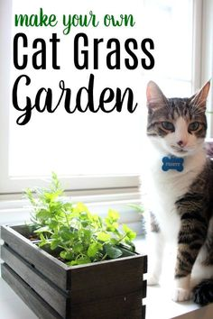 Make a Cat Grass Garden with Herbs Cats Can Eat Does your cat eat grass outside? Is your cat trying to eat plants inside your home that aren't safe? Make your own cat grass garden with herbs that cats can eat safely. Cat Safe Plants, Cat Plants, Permaculture, Cat Friendly Plants, Cat Grass, Cat Garden, Garden Grass, Herbs Garden, Cat Sitting