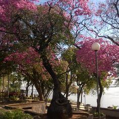 Costanera de Corrientes Outdoor Rooms, Outdoor Gardens, Scandinavian Garden, Brazil, Spaces, History, World, Design, Argentina