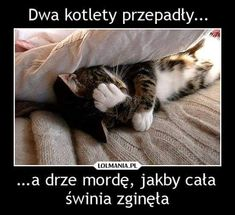 Wtf Funny, Hilarious, Polish Memes, Happy Photos, Dad Jokes, Man Humor, Best Memes, Animals And Pets, Funny Pictures