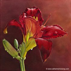 """Glory in Red daylily""  aquarelle de Catherine Mc Clung, artiste canadienne qui vit et travaille dans le Michigan."