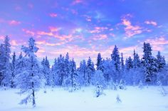Discover a land of pure wonder and adventure with our tailor-made holiday packages to Swedish Lapland. Customised your white winters Lapland travel. Experience the winter and book your short breaks and holidays in Lapland. Solar Energy For Home, Solar Energy Projects, Lappland, Visit Sweden, Hotels, Snowy Trees, Sweden Travel, Winter Sunset, Honeymoon Destinations
