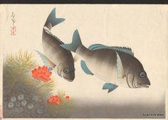 Bakufu Ohno Japanese Woodblock Black Sea Bream