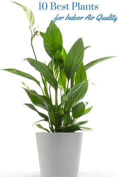 10 Best Plants for Indoor Air Quality - the best plants to improve air quality inside: http://www.suptamin.com/