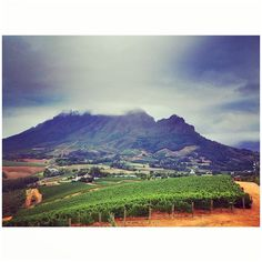 Our videographers have been out playing in the Cape Winelands. #wine #vineyards #winelands #franschhoek #stellenbosch