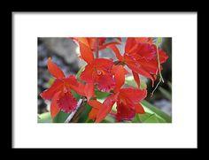 orchid, orange, flower, nature, bloom, interior design, michiale, schneider, photography