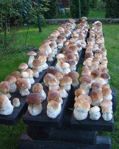 Picking wild mushrooms - popular czech family outdoor activity
