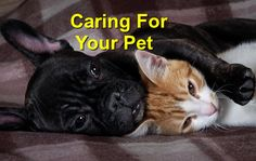 Caring for your pet - Champion Wood Animal Hospital Wood Animal, Ways To Show Love, What You Can Do, Your Pet, French Bulldog, Champion, Pets, Animals, Animals And Pets