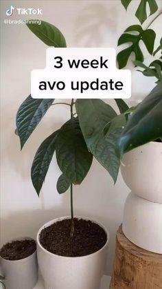 Succulent Gardening, Garden Plants, Indoor Plants, House Plants, Inside Plants, Room With Plants, Cool Plants, Growing Fruit Trees, Growing Plants