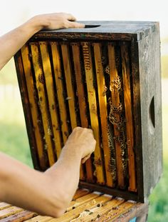 keep bees
