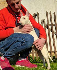 Love Bullterrier Sophie