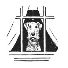 """Illustration by Edwina, taken from """"Two Gentleman and a Lady"""". Irish Terrier, Airedale Terrier, Wire Fox Terrier, Fox Terriers, Vintage Dog, Little Dogs, Art Techniques, Illustration Art, Illustrations"""