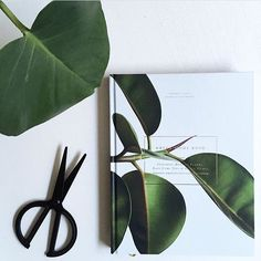•• The Green Home Book. Australian Exclusive to Simple Form. Learn how to NOT kill your indoor plants. Our popular @greenhomebook is not only informative but breathtakingly beautiful, both between the pages and on the outside. A book for those trying to replicate 'mum's plants when I was a younger'. Fresh drop from Finland has just landed. Link in our bio.    Flat lay capture by @renatenils1