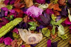 How to Dry Flowers in a Dehydrator