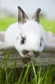 In love with this adorable bunny!