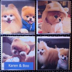 Boo the dog coasters set of 4 with your name by GorgeousGlassware, $12.00