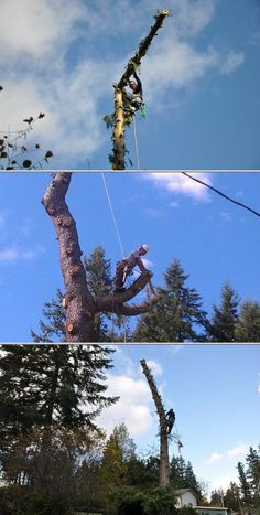 Get estimates on tree trimming cost when you hire tree trimmer, Colby Seaman. He specializes in toppings and trees in tight spaces. He also provides tree cutting service, and consultations on tree problems.
