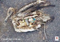 Many marine animals mistake plastics for food