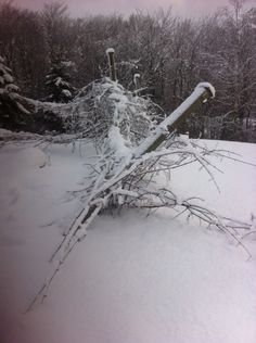 The snow storm lastnight knocked out our grape poles #nomoregrapes
