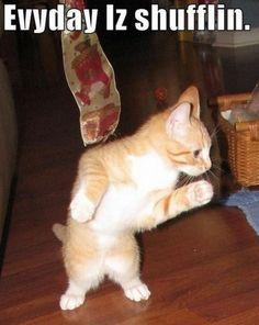 Dance kitty dance!